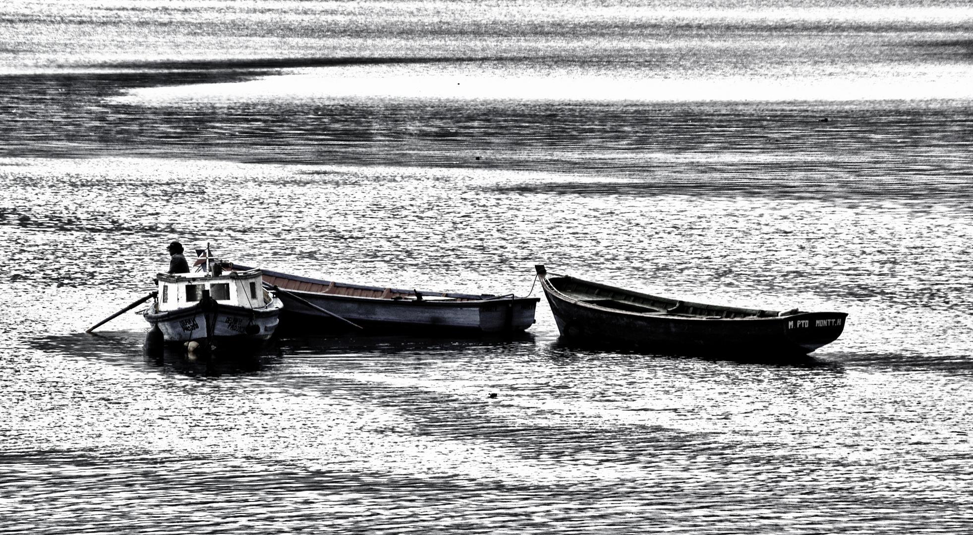 fischer in puerto montt