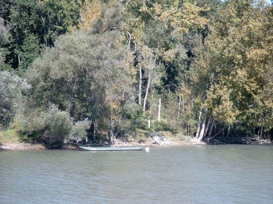 Fischernachen am Altrhein