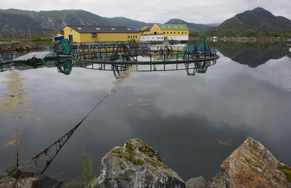 Fischfabrik1
