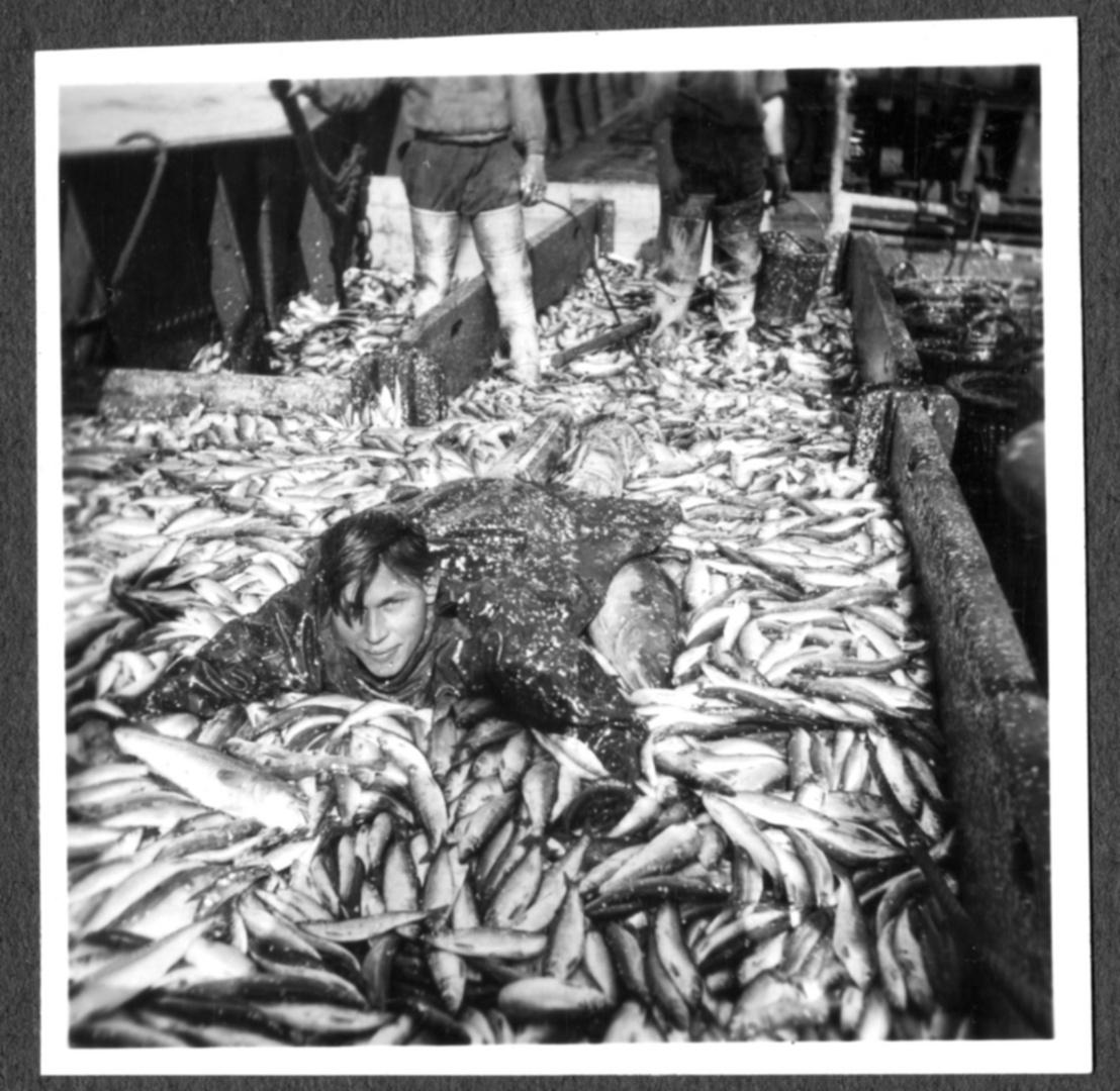 Fischfang in der Deutschen Bucht um 1930