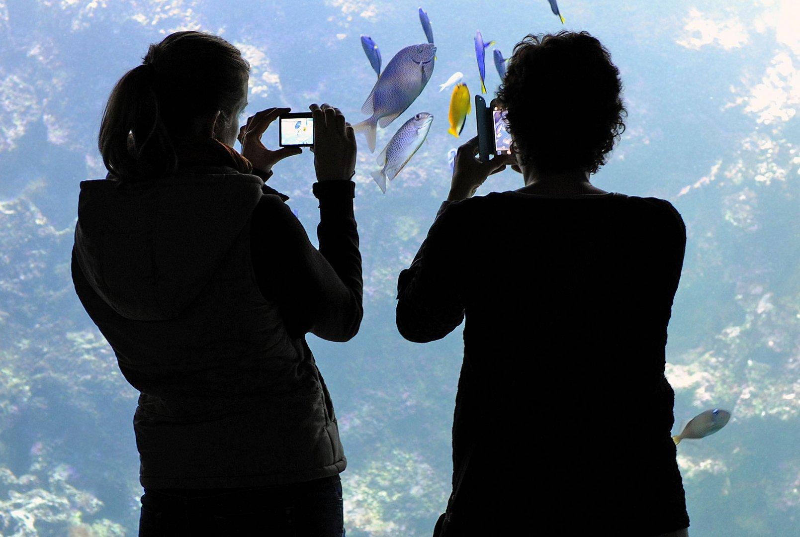 Fischfotografie