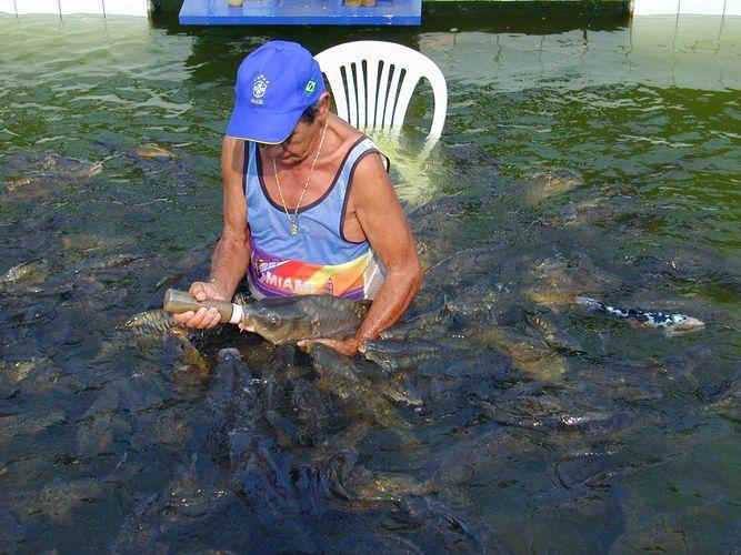 Fischfütterung am Rande des Nationalparks in Foz do Iguazu (Grenzstadt auf brasilenischer Seite)
