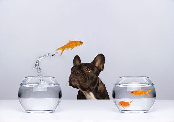 Fischfutter <-> Futterfisch