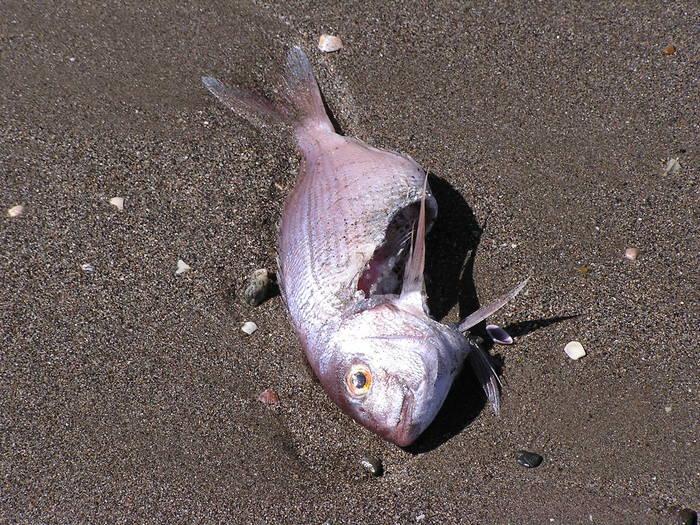 Fischmäuler