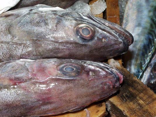 Fischmarkt auf Aegina