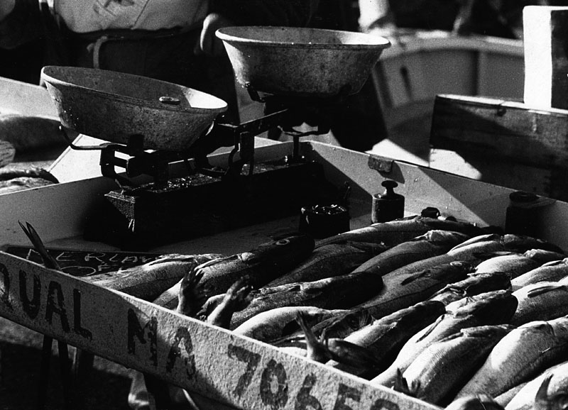 Fischmarkt in Marseille