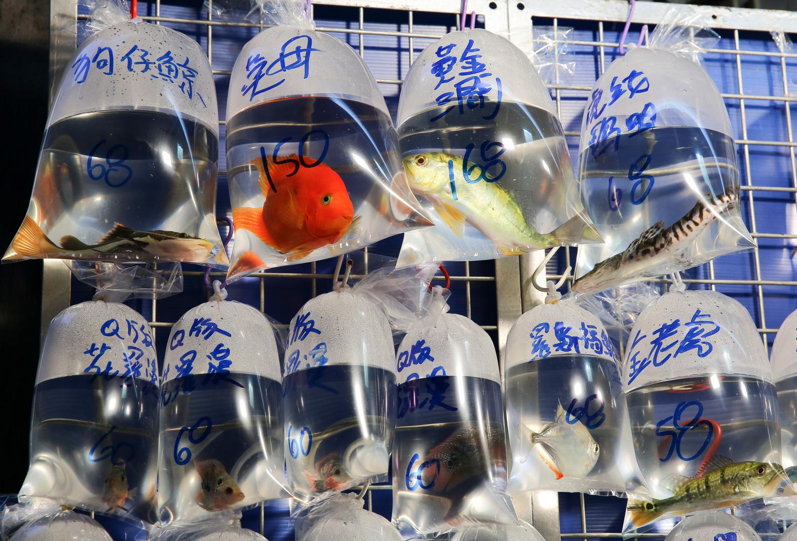 Fischmarkt in Tüten