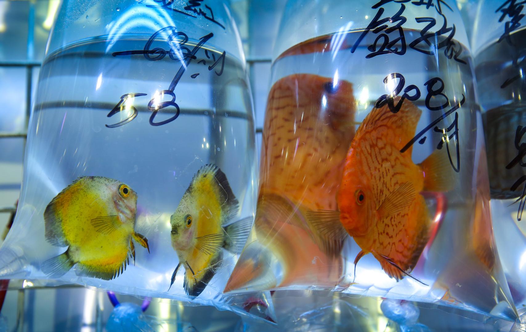 Fischmarkt mal anders