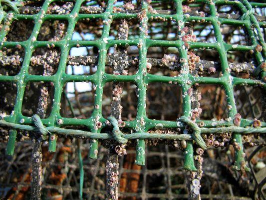 Fischreuse, Cascais....