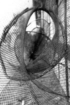 Fischreuse