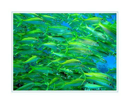 Fischsuppe :-)