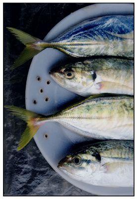 Fischteller