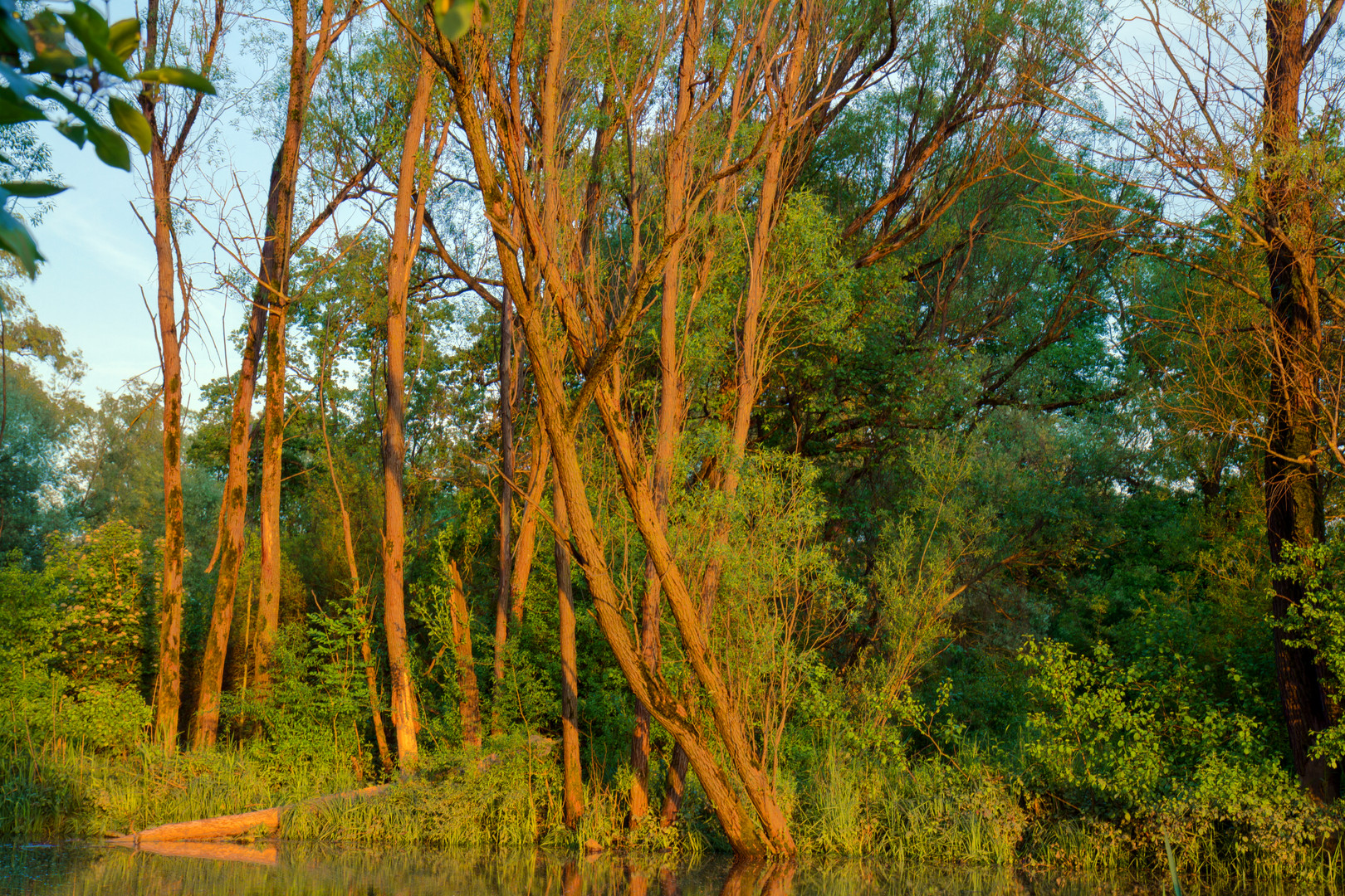 Fischweiher bei Sonnenutergang