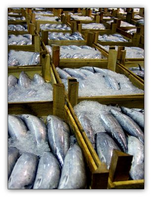 ~fish~