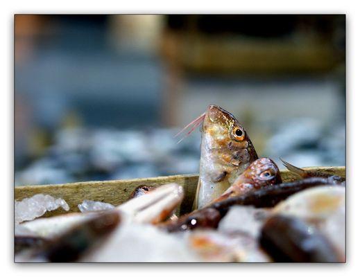 ~fish²~