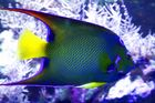 Fish in Colors