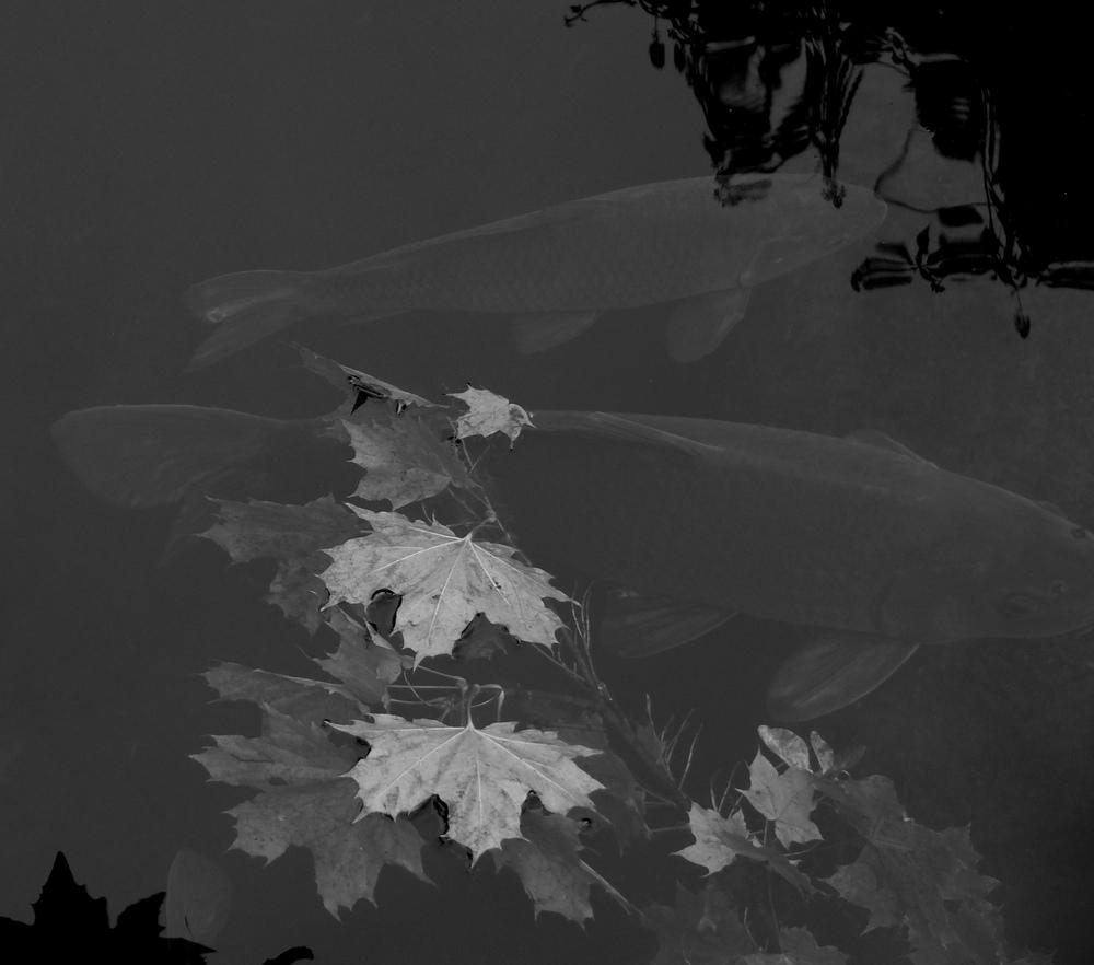 fish & leaves