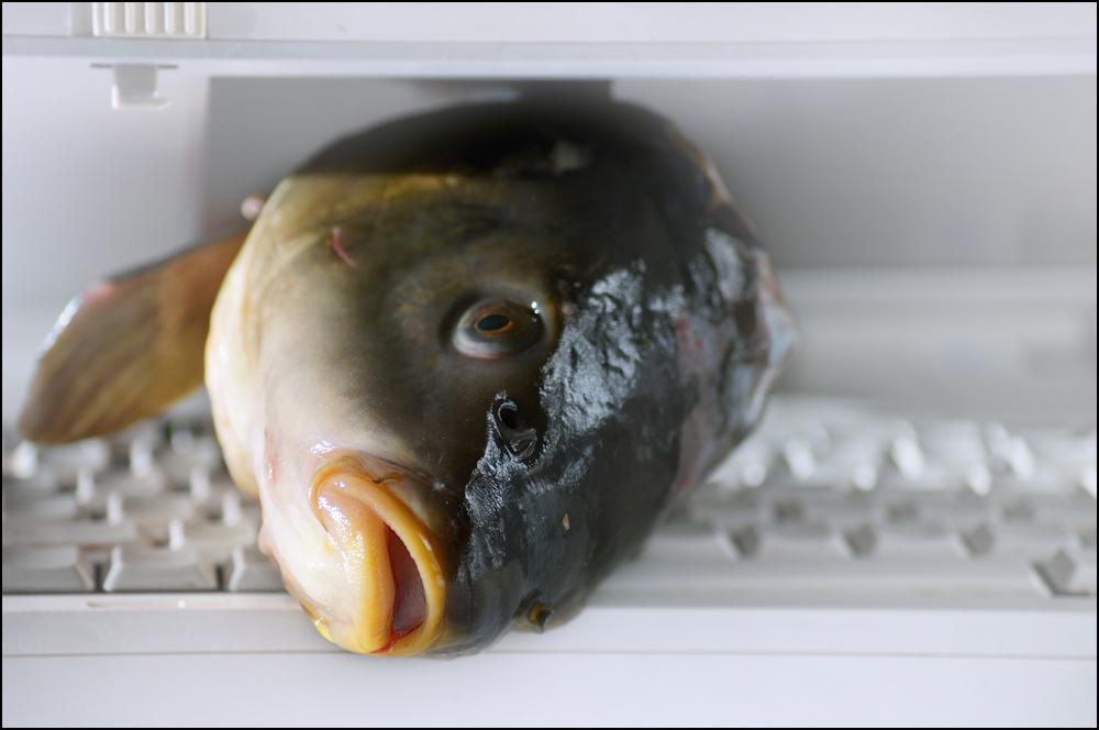 - FISHMAC -