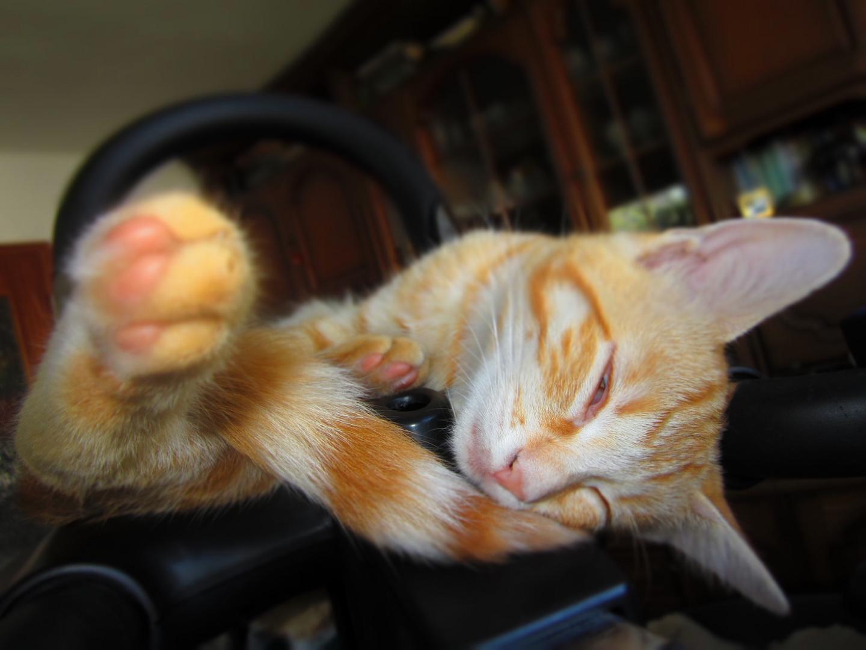 Fitness-Katze