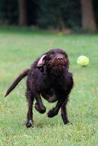 fixiert auf den ball