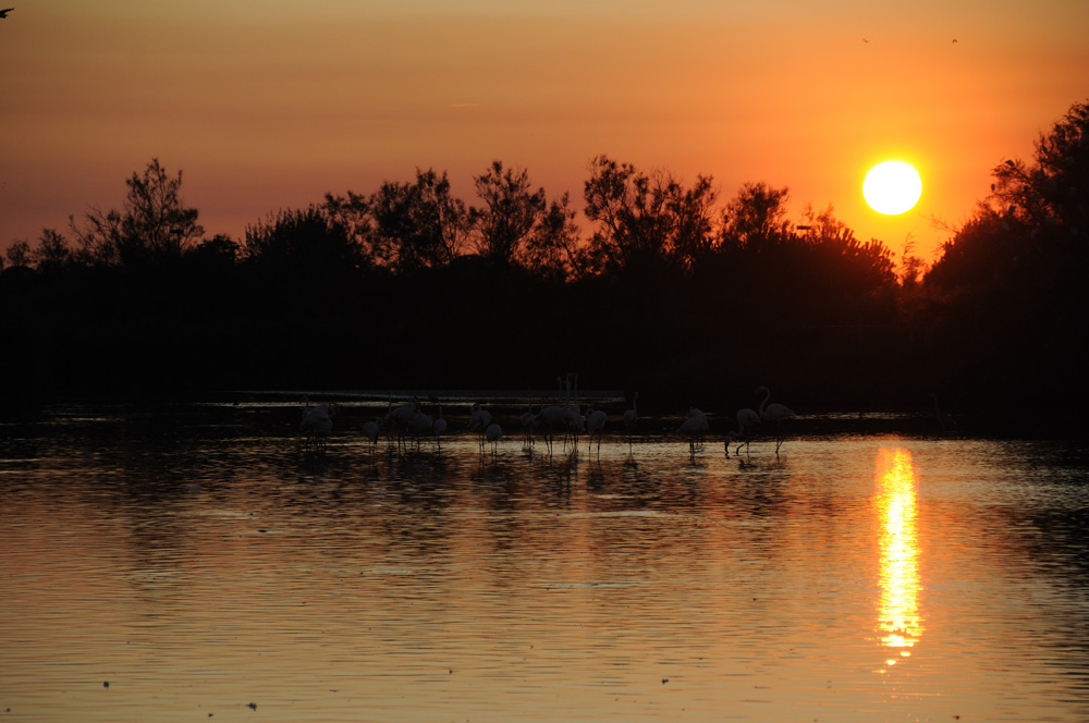 Flamands roses coucher de Soleil 1
