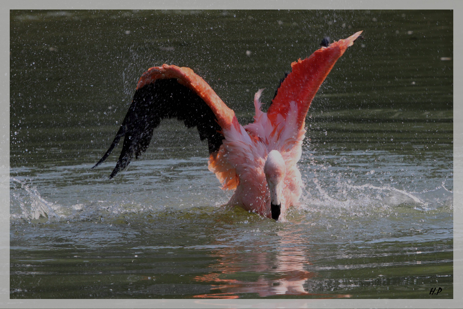 Flamant rose j'ai chaud 1