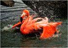 Flamenco !!