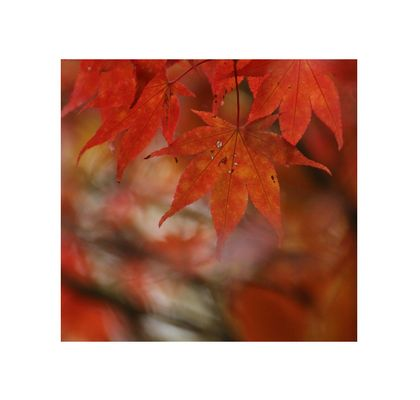 Flames of Autumn