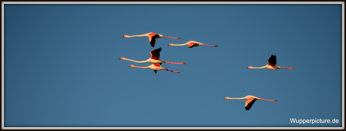 Flamingo Airlines