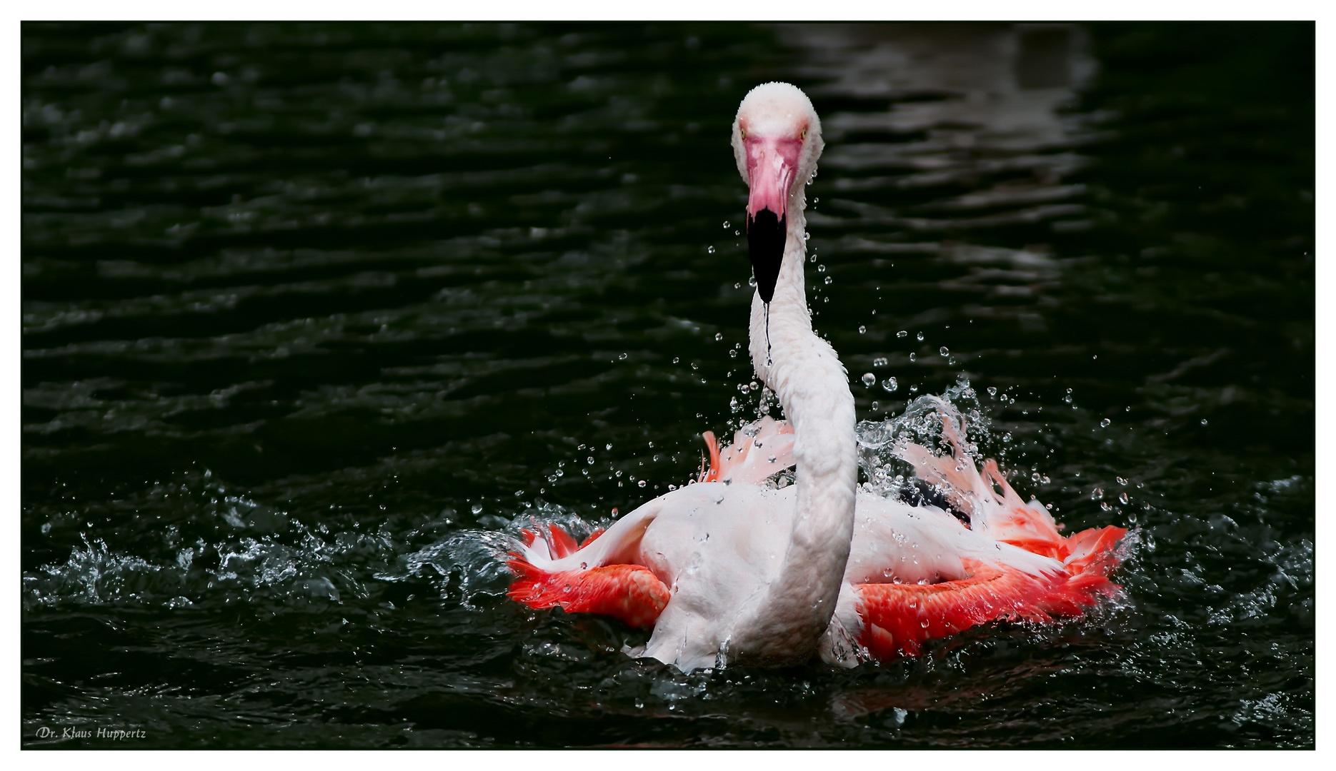 Flamingo-Badetag -3-
