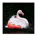 Flamingo-Badetag -6-