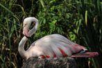 Flamingo - Bein - Einklappung