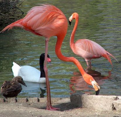 Flamingo & Co.
