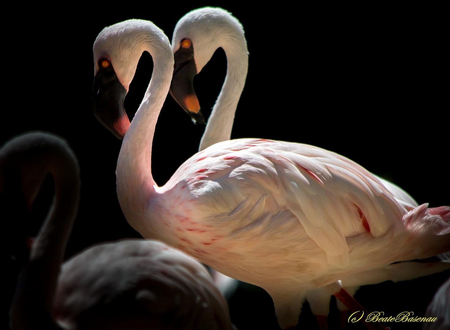 Flamingo-Duett