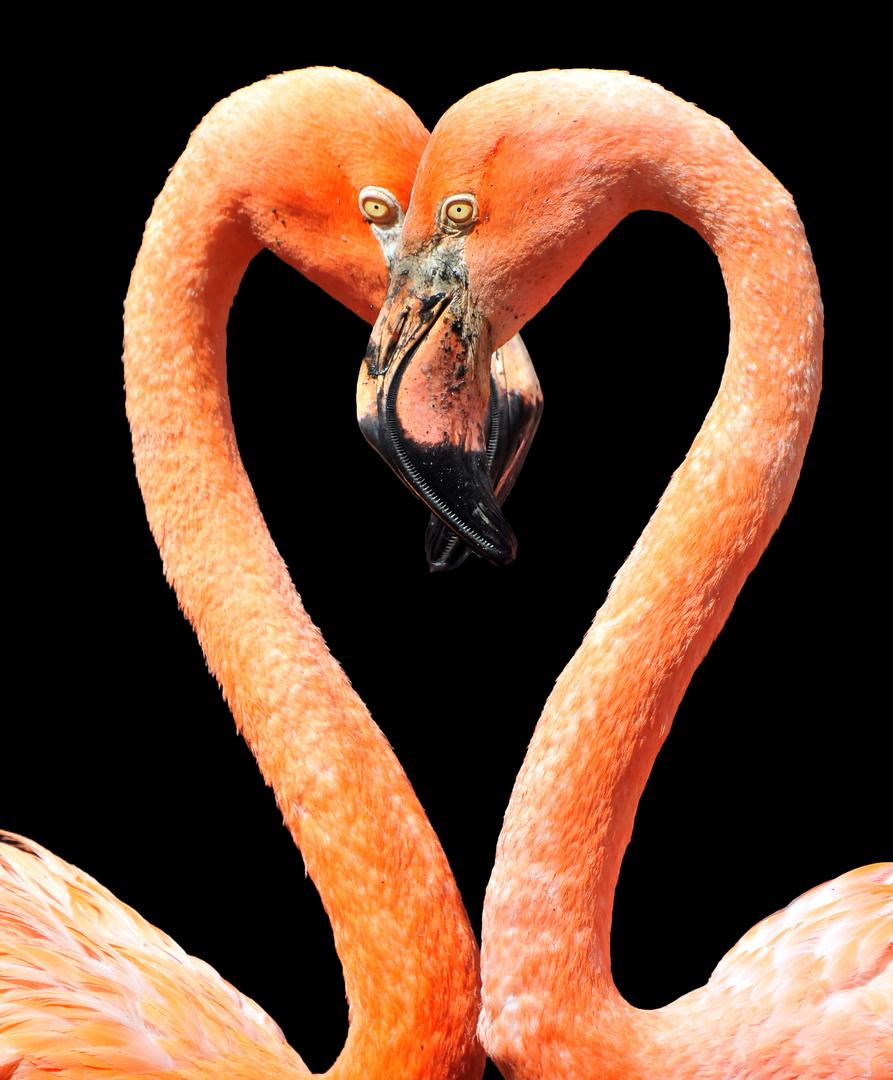 Flamingo-Herz
