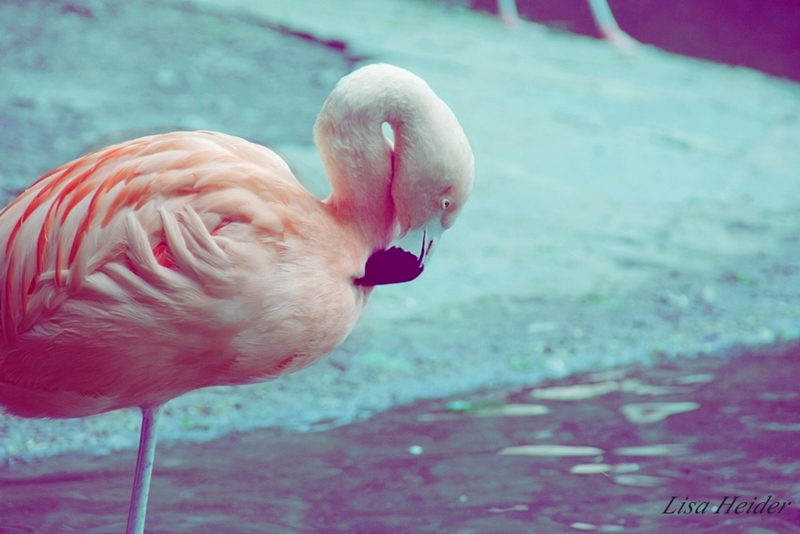 Flamingo im Wuppertaler Zoo