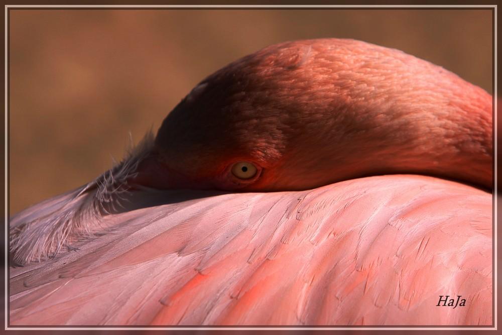 Flamingo im Zoo.