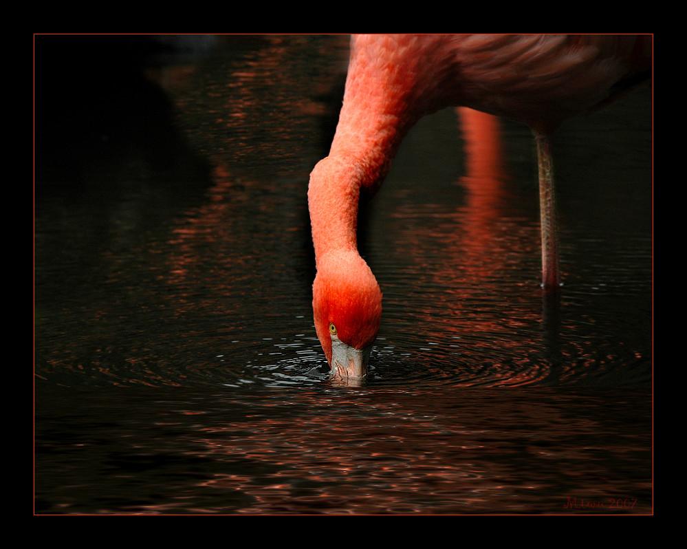 """ Flamingo Road"""