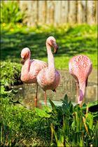Flamingo - Road