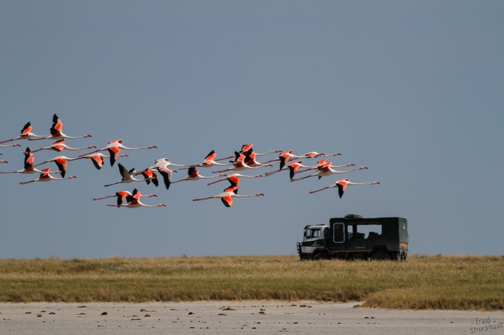 Flamingo überrundet Truck