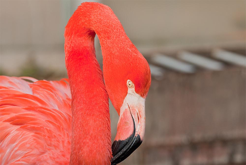 Flamingo ZOO OS 2013
