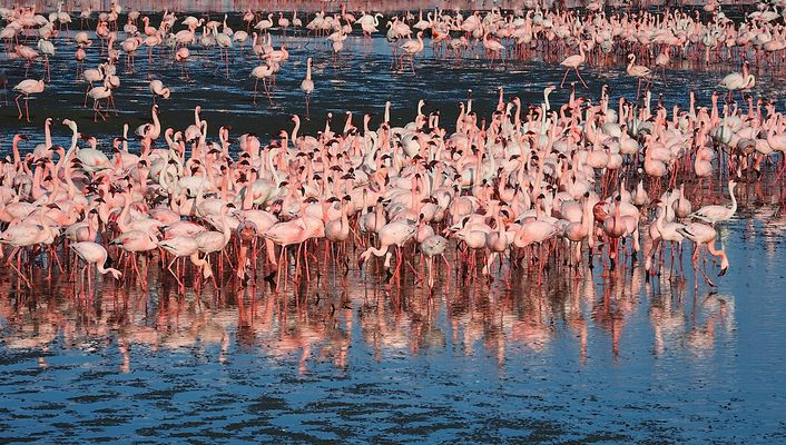 Flamingoes at the Walvis Bay Lagune