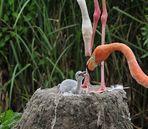 Flamingokind - Hunger