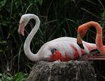 Flamingokind im Federbett