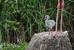 Flamingokind: Klein, rosa und stark