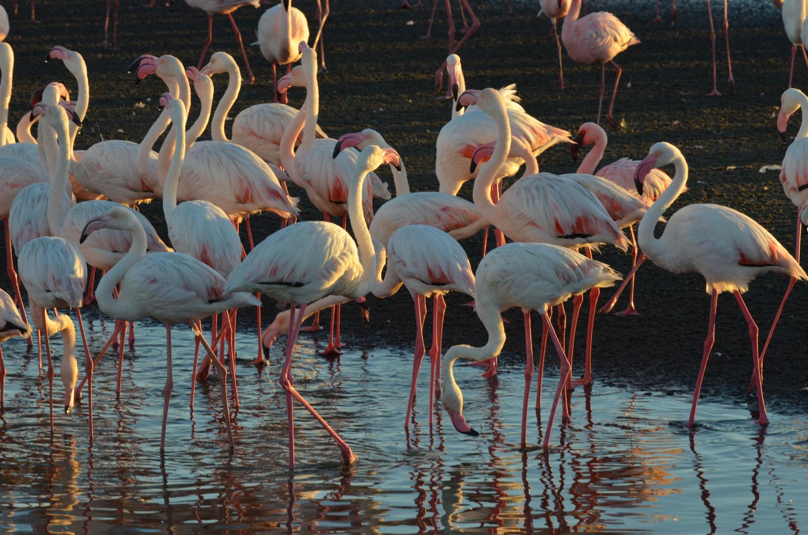Flamingopoint