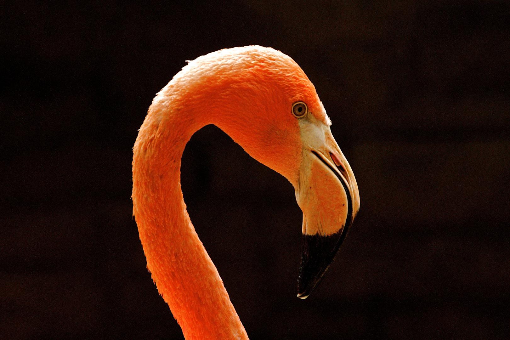 Flamingoprofil