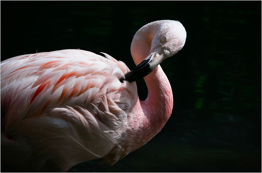 flamingos....