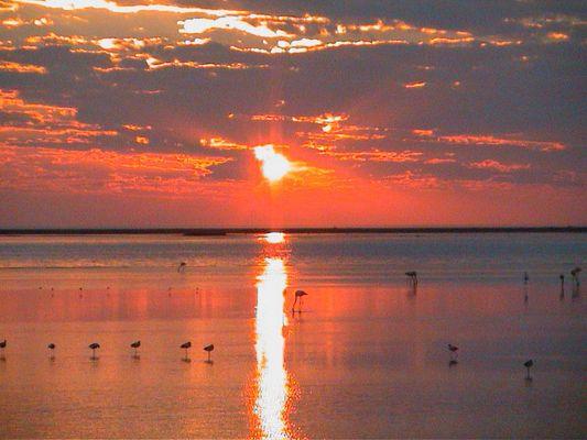 Flamingos am Strand