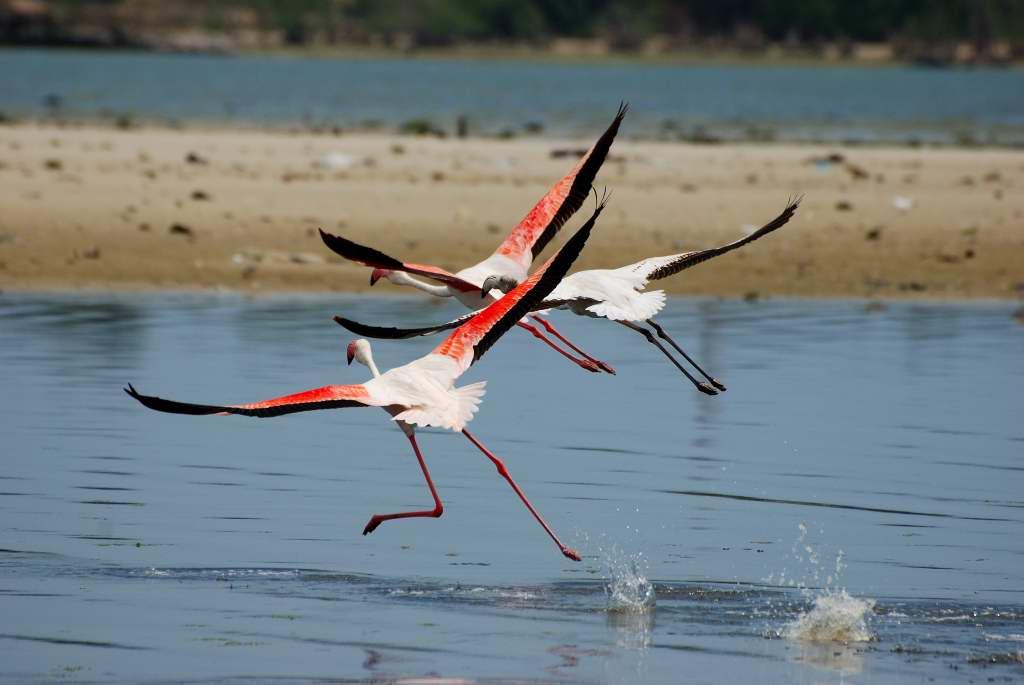 Flamingos auf der Flucht
